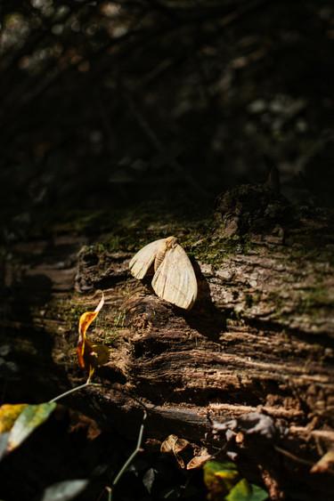 Woods-09.20.20-56.jpg