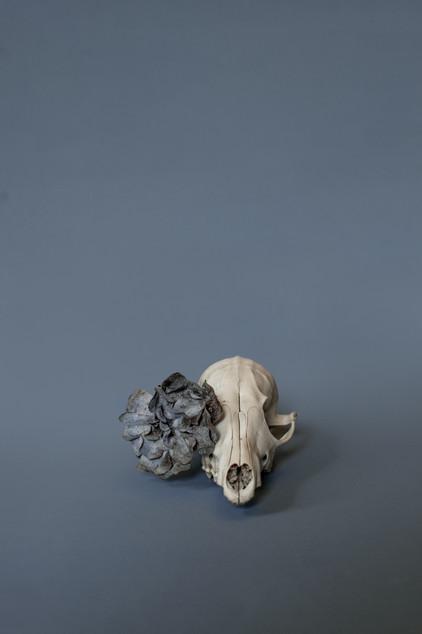 Skulls-RD2-25.jpg