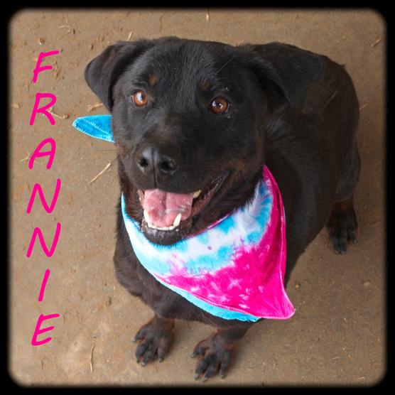 Frannie copy.jpg