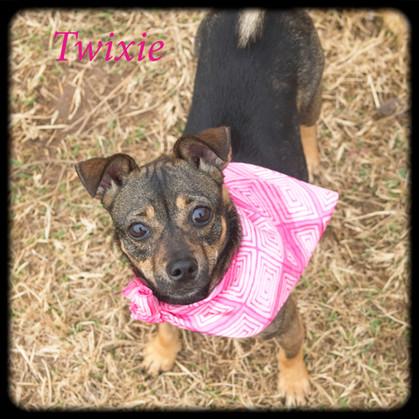 Twixie