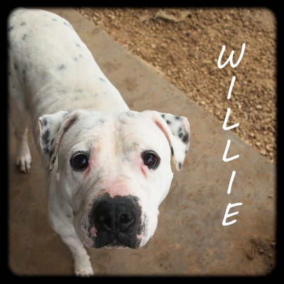 Willie5.jpg