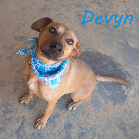 Devyn