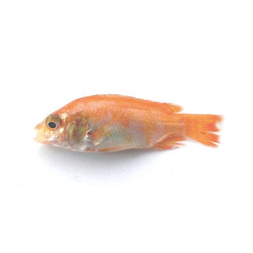 Alevino 2 - 4 gramos