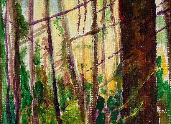 Cockleroy Forest - Framed Acrylic