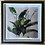 Thumbnail: Peace Lily - Signed & Limited Edition framed print - 20 x 20cm