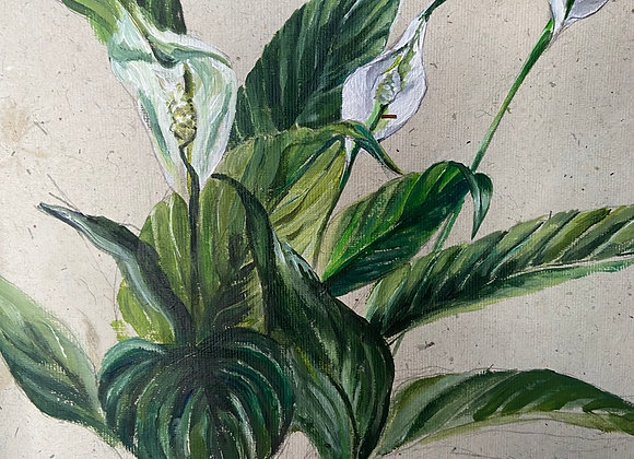 Peace Lily - Signed & Limited Edition framed print - 20 x 20cm