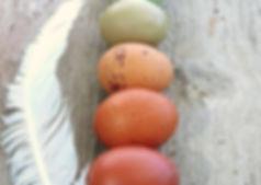 rainbow egs.jpg