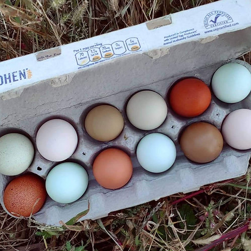 Rainbow Egg Collection