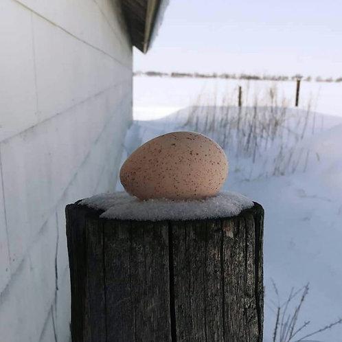 Slate Turkey Eggs