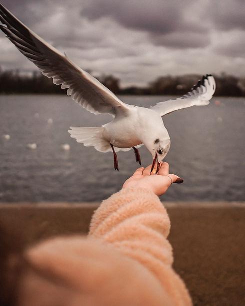 white-bird-on-picking-food-3651618.jpg