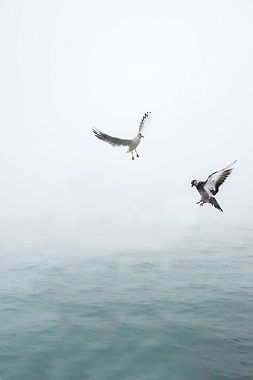 pigeon-and-seagull-flying-above-body-of-