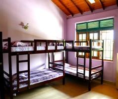 Lilac Dorm Room