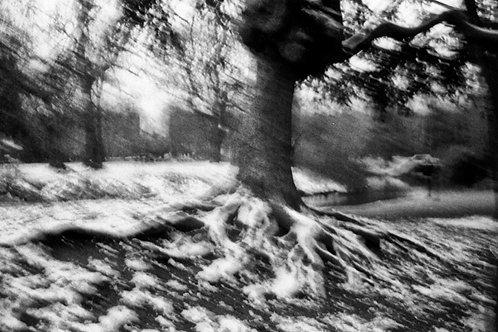 Tree / Rooting
