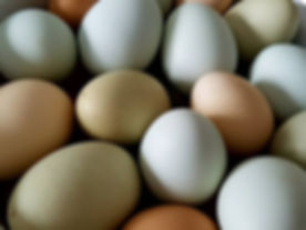 Free Range Eggs   Howick Village Butchery   Auckland