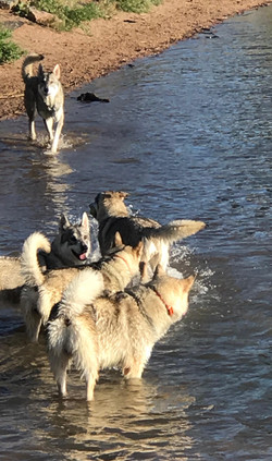 May 2017 Chatfield Dog Park