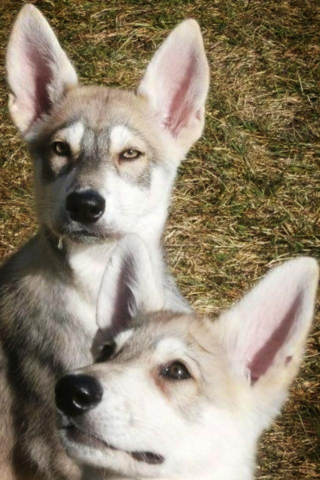 Nero and Nala when puppies