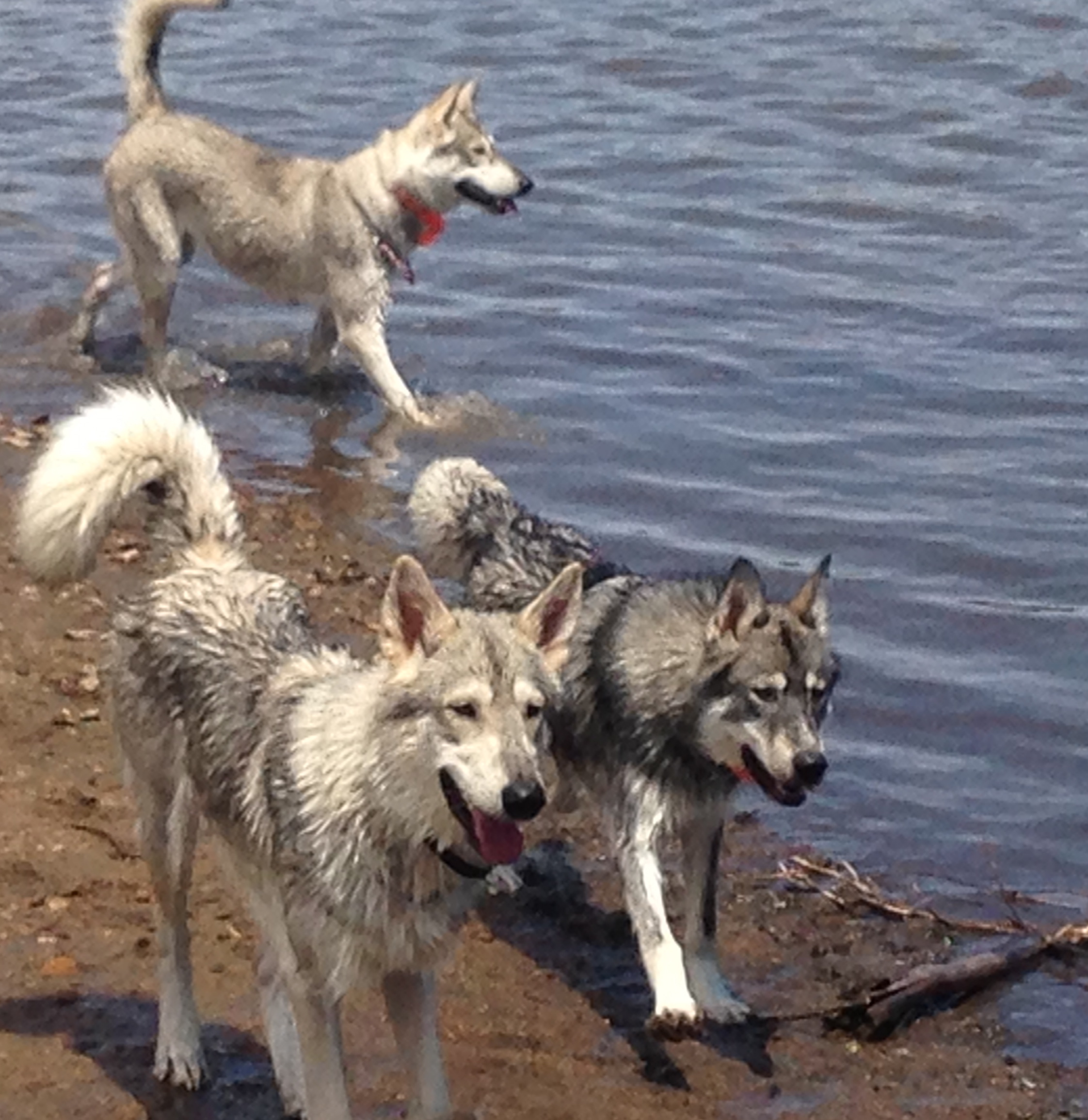 The pack at the lake