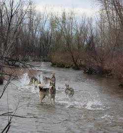 April 2017 Cherry Creek Dog Park