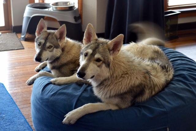 Nero and Nala