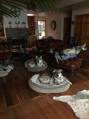 The pack takes over the house