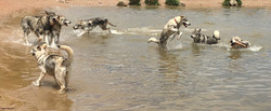 Pack walk water fun