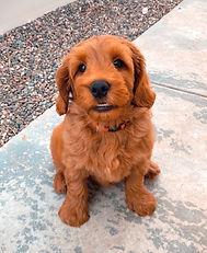 Charley 9 weeks old