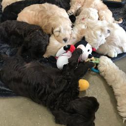 Puppy Dreams...