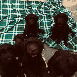 Harley's puppies