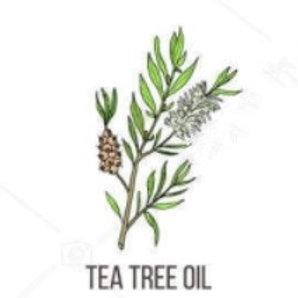 """שמן אתרי עץ התה - 100 מ""""ל"""