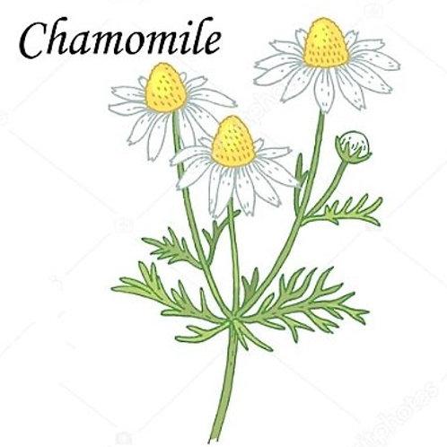 קמומיל - פרחים
