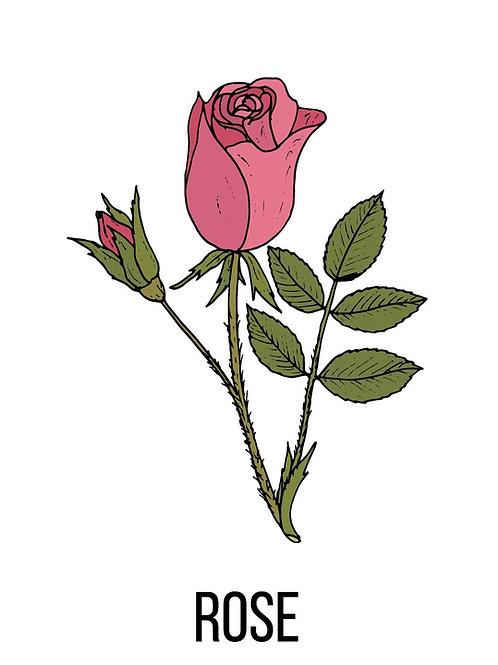 פרחי ורדים - עלי כותרת מופרדים