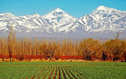 Vayssières - Argentina-Mendoza-Vin.jpg