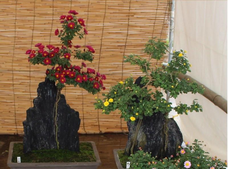 花と緑の講習 (4/29)岩づき盆栽教室
