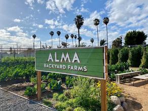 ALMA BACKYARD FARMS