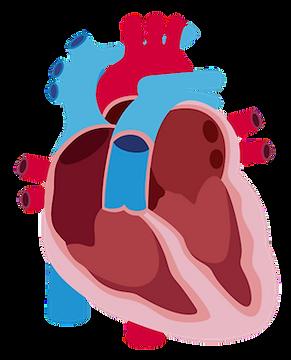 Heart Failure Heart Diagram