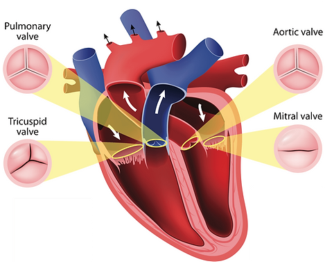 valvular-heart-disease