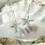 Thumbnail: Pewter Starfish Earrings