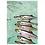 Thumbnail: Fishes Birthday Card