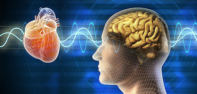 video-scientific-foundation-of-the-heart