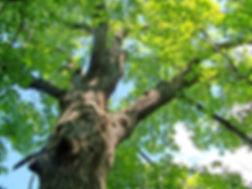 expert-writing-samples-strong-oak