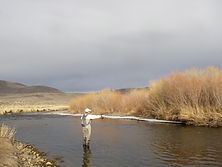 east walker river, fly fishing