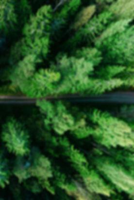 Metsä, retkeily, virkistys