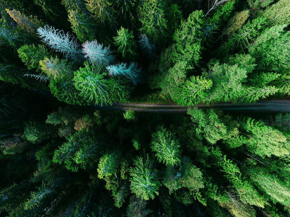Luftaufnahme Kiefernwald - Durchatmen und neu starten - Heilprakterin für Psychotherapie Carmen Seemann