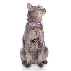 Kaulapannat ja valjaat kissoille
