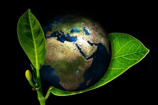"""Una dieta basada en plantas es esencial si queremos proteger el medio ambiente"""""""