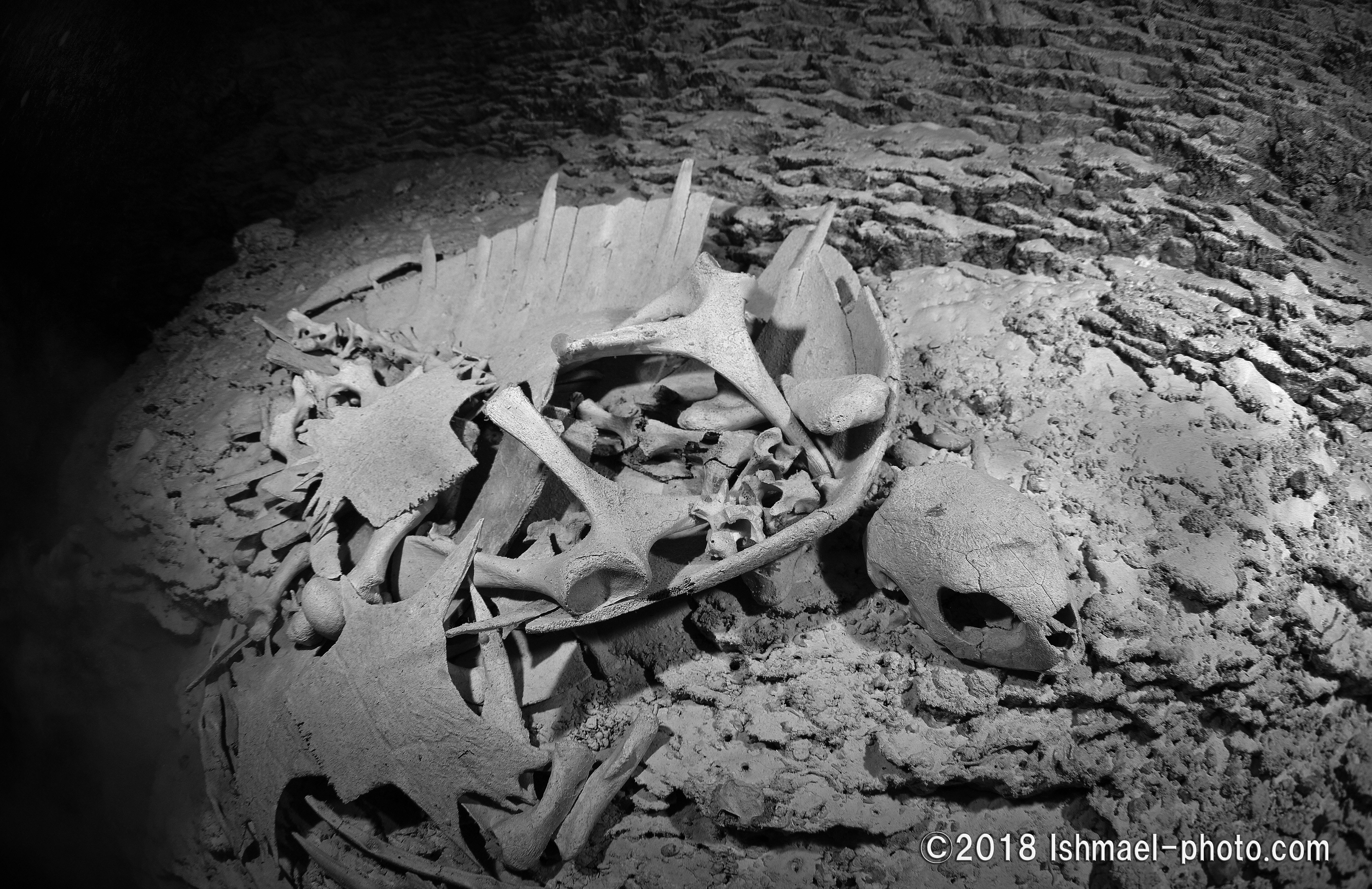 Grave 墓場