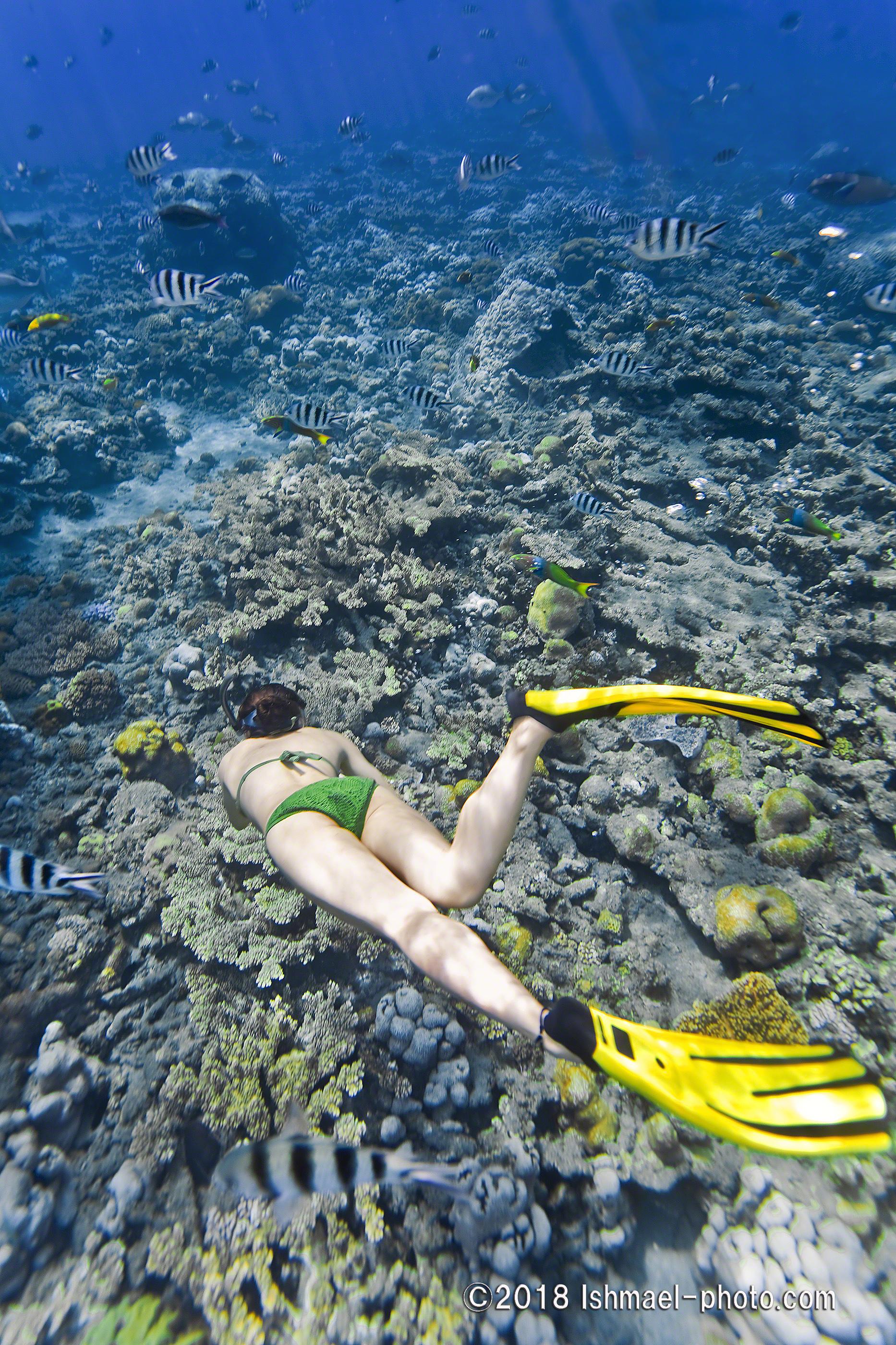 snorkeler