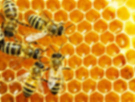 abeilles-deposent-miel-dans-alveoles-ruc