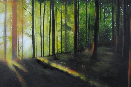 Forest Sunrise  (18x36)