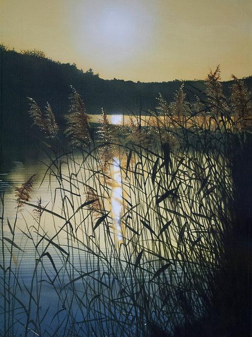 Summer Grasses  (26x18)